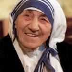 """Stokrotki """"Matka Teresa z Kalkuty"""""""